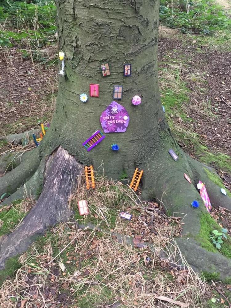 Fairy woodland 6