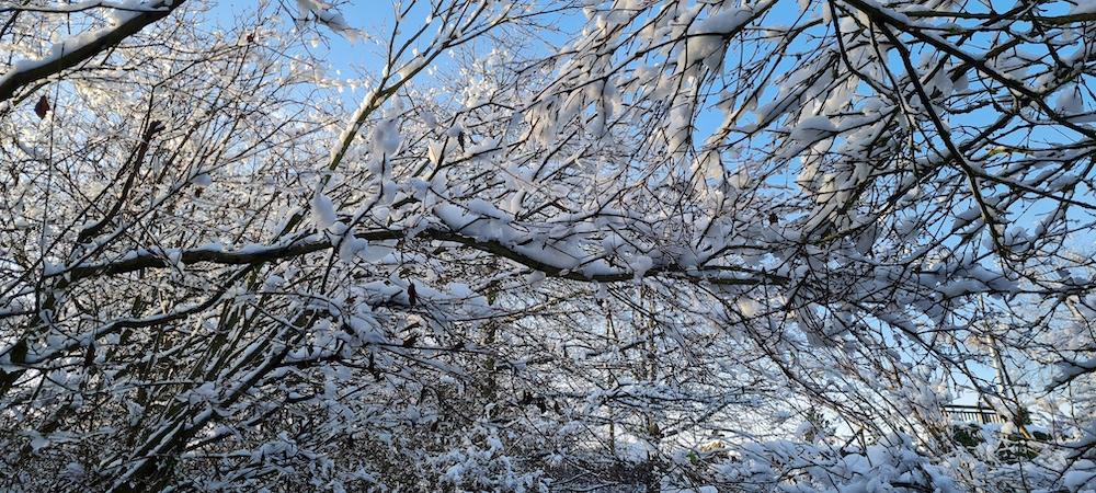 Snow 21 Branches Sarah Coates
