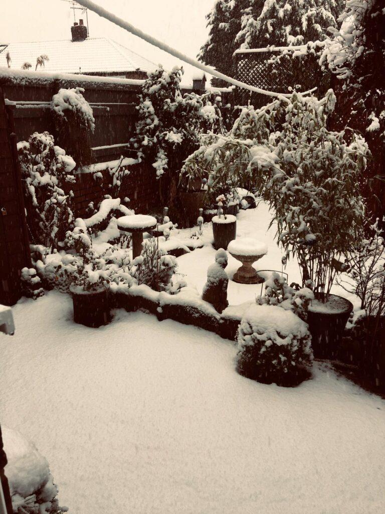 Snow 21 Garden Michelle Weston