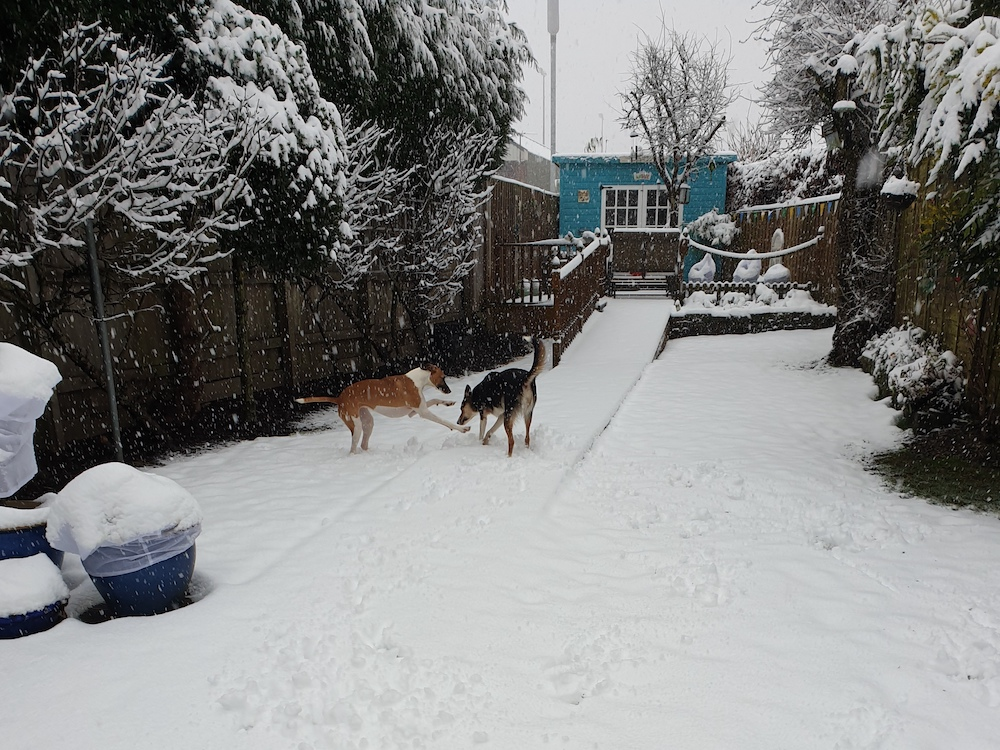 Snow 21 Garden dogs Diane Williams