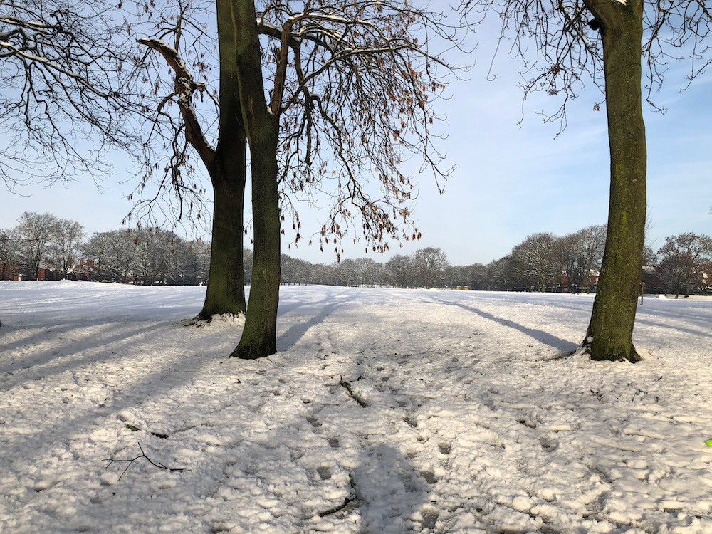 Snow 21 Tree shadows Cross Flatts Park Sue Talbot