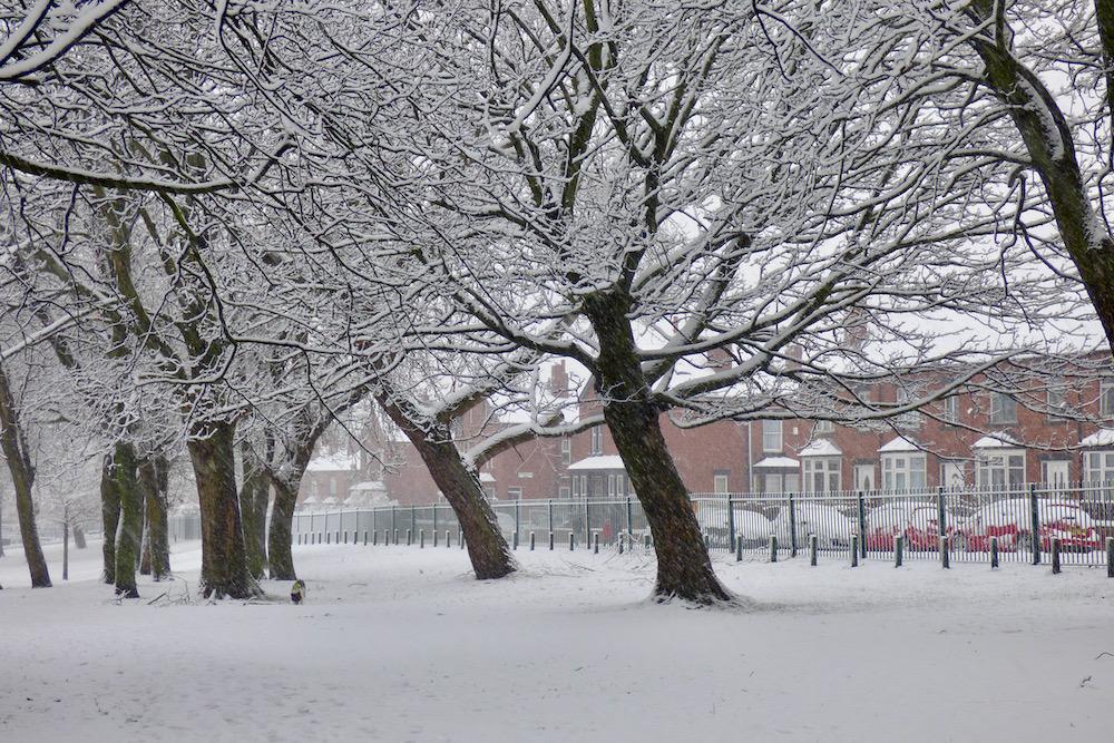 Snow 21 Trees in Cross Flatts Park 2 Jeremy Morton