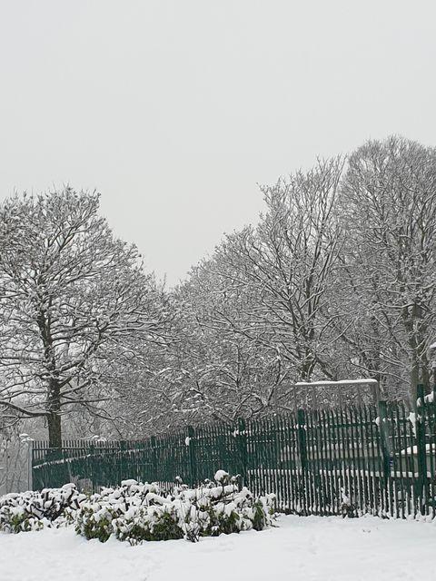 Snow 21 Trees in Cross Flatts Park Michele Foxton