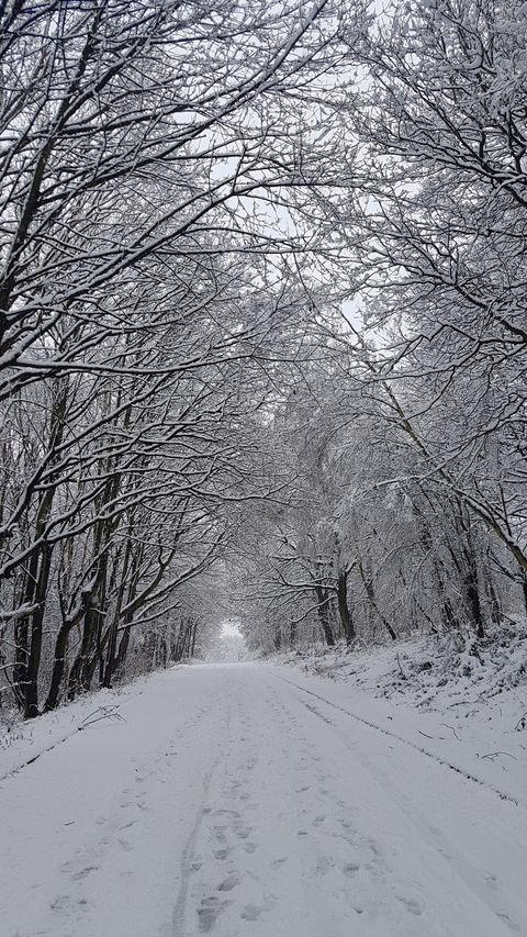 Snow 21 Trees in Middleton Park